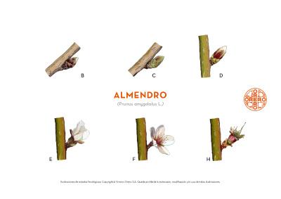 Información sobre tratamientos fitosanitarios del Almendro