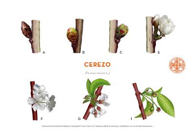 Información sobre tratamientos fitosanitarios del Cerezo