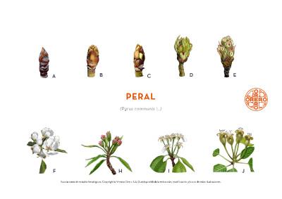 Información sobre tratamientos fitosanitarios del Peral