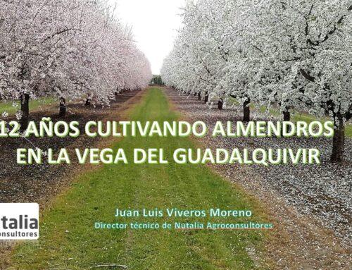 12 años cultivando almendros en el valle del Guadalquivir.