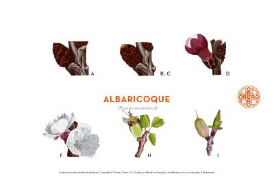 Información sobre tratamientos fitosanitarios del Albaricoque