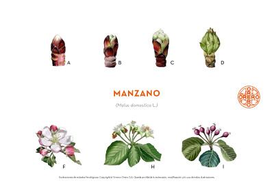 Información sobre tratamientos fitosanitarios del Manzano